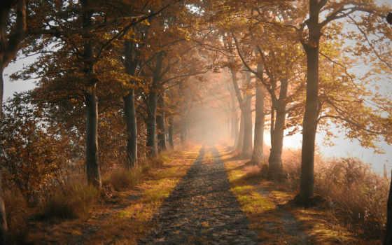 осень, природа, дорога Фон № 90394 разрешение 1920x1080