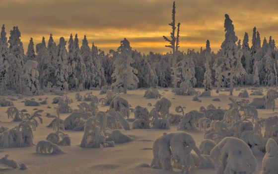 priroda, категории, les, telefon, снег, zima, утро,