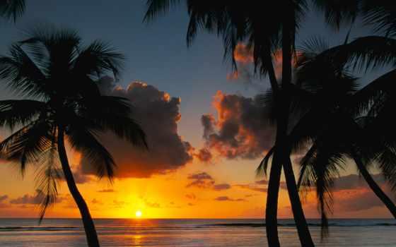 пальмы, закат, природа, закате, пляж, солнца, www, скалистый,