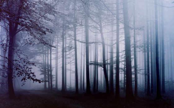 туман, лес, nat, утро, лесу, фотообои, trees, трек,