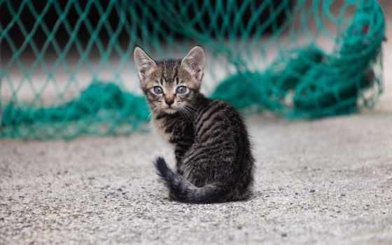 подборка, высоком, разрешений, zhivotnye, кошки,