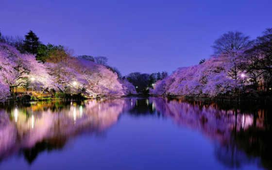 japanese, природа, Сакура, cvety, осака, озеро, небо, цветение, фонари, отражение, вечер,