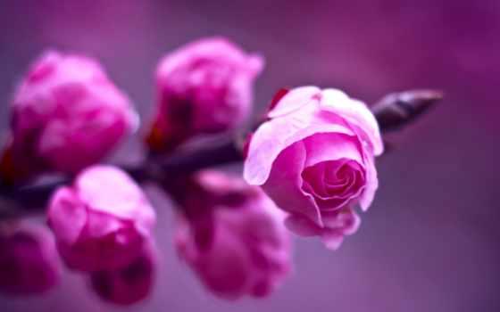 весна, весеннее, утро, шкала,