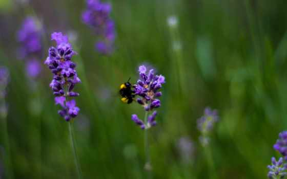нр, sony, lavender,