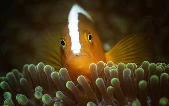 fish, водой, ocean, coral, zhivotnye, underwater,
