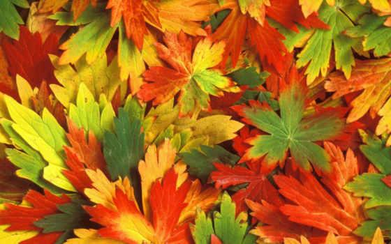 осень, листья Фон № 12310 разрешение 1920x1200
