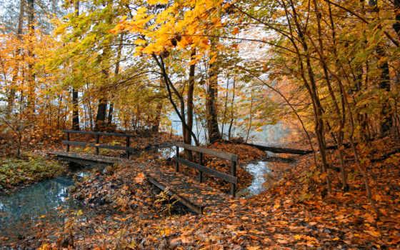 осень, природа, листья, мостик, пруд, желтые, туман, осенние, деревья, места, фотографии, картинка,