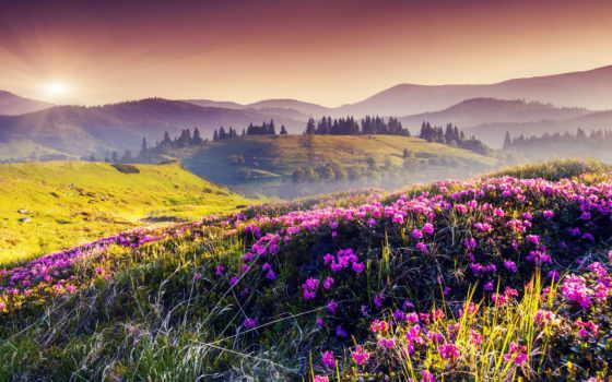 горы, цветы, природа, горах, лес, italian, sun, italy, лучшая,
