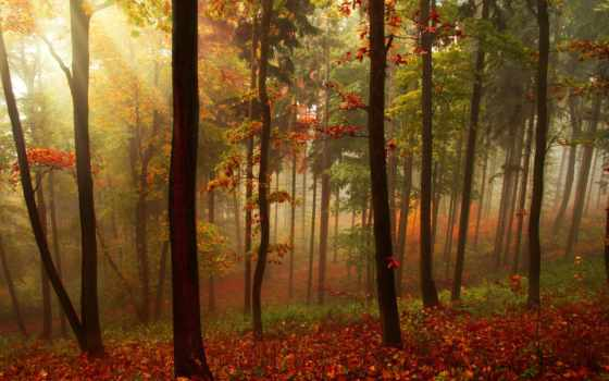 landscape, лес, природа, trees, осень, rays, листья, beams,
