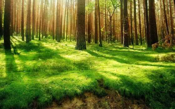 трава, зелёная, trees, лес, лесу, свет, дерево, поляна, зелёный, цветы,