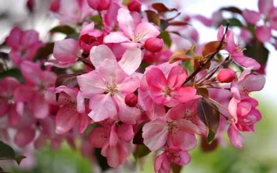 cvety, весна, okay, fuat, okazaki, рассвета, картинках, лепестки, photos,