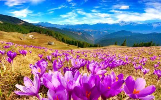 горы, cvety, небо, весна, луга, sun, крокусы, природа, landscape,