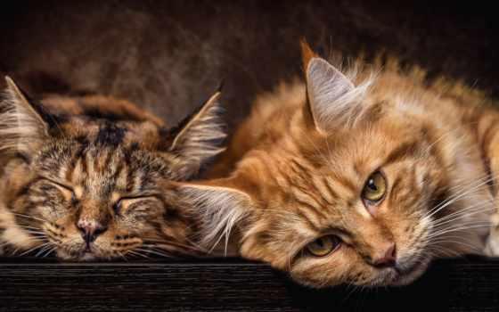 кот, photos, cats, tobias, gawrisch,