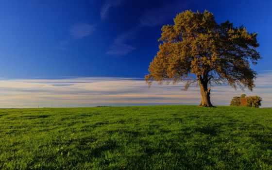 небо, трава, дерево, луг, поле, облако, зелёный, trees, blue