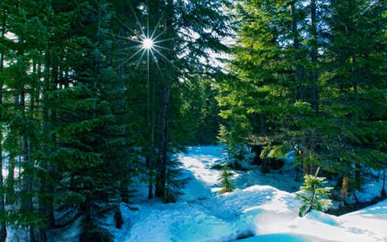 лес, winter, елка, природа, хвойный, палуба, лет, one, color