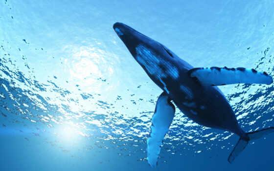 кит, animal, биг, blue,, ocean, море,