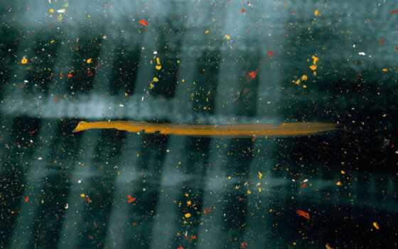 art, дождь, краска, abstract, blue, white