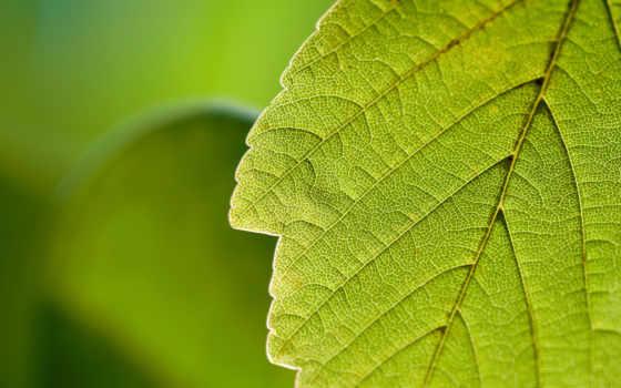 макро, природа, зелёный