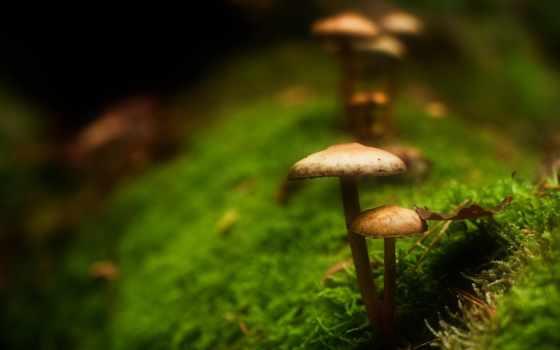 дек, грибы, мох