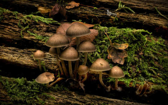 грибы, дереве, грибами, трава,