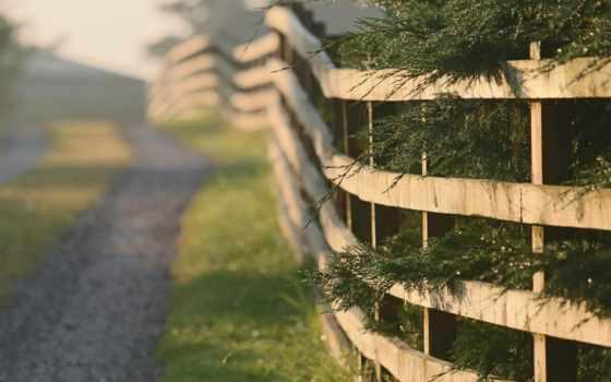 дерево, забор, утро, дорога, поля, красивые, landscape, трава,