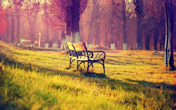 осень, природа, скамейка, park, trees, листва, свет, лес, lantern, парке,