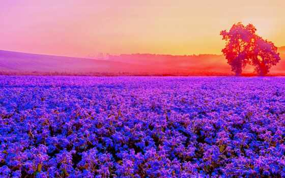 поле, flowers, art, поля, цветов, закат, panels, sun,