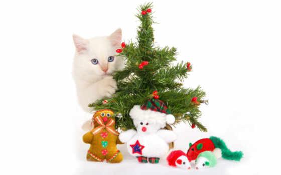 новый, год, кошки, новым, кошкой, годом, quot, ру,