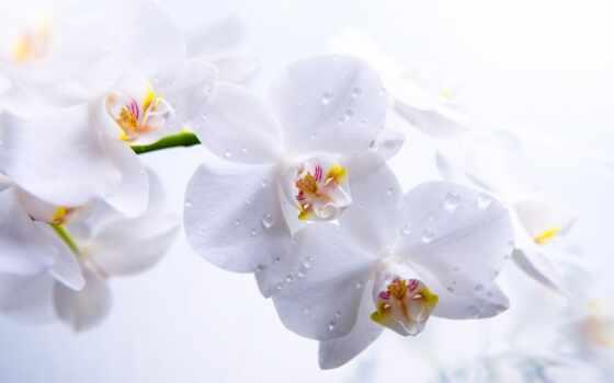 орхидеи, цветы Фон № 70931 разрешение 2560x1600