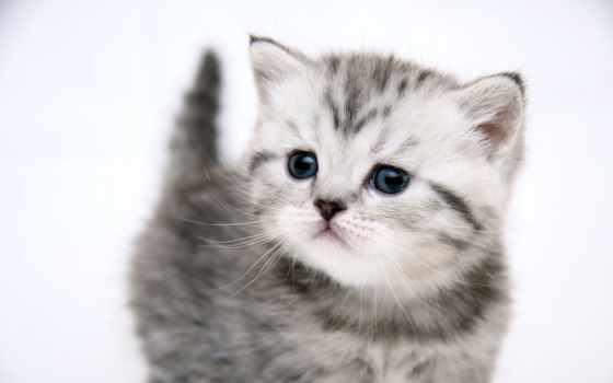 котенок, маленький, kot