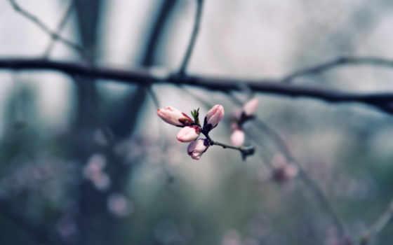 iphone, марта, весна