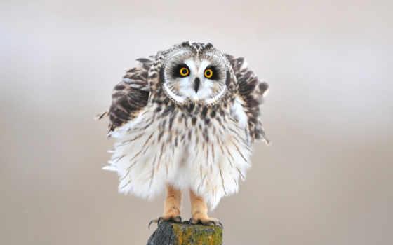 сова, птица Фон № 99597 разрешение 2560x1600