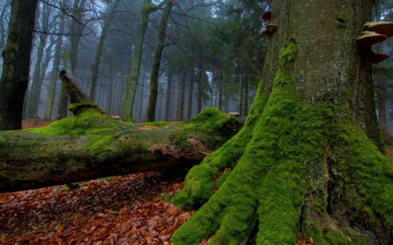 мох, деревя, осень, листва, стволы, лес, грибы, дерево,
