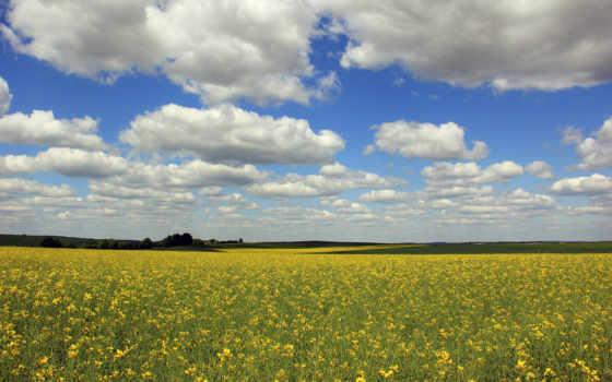 поле, you, рапс, clouds, high, oblaka, disney,