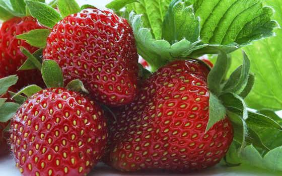 summer, клубника, ягода, плод, весна, осень