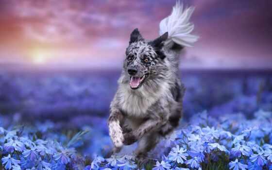 собака, cvety, animal, best, cute, уж, loaded