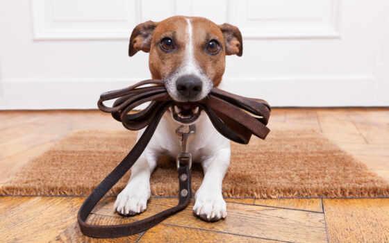 собака, вести, holding