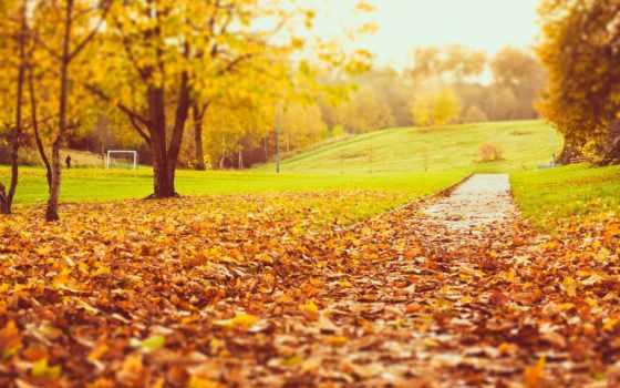 осень, листва, природа