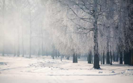 снег, white, winter, коллекция, береза, лес