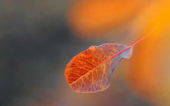 лист падает