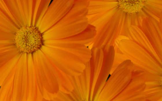 цветы Фон № 19628 разрешение 2560x1600
