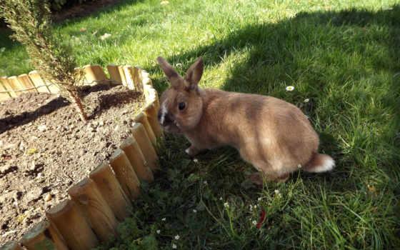 кролик, desktop, animal