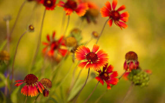 яркие, цветы, макро