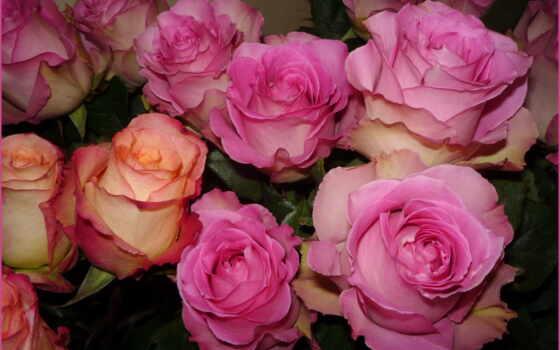 розы, ipad, мини