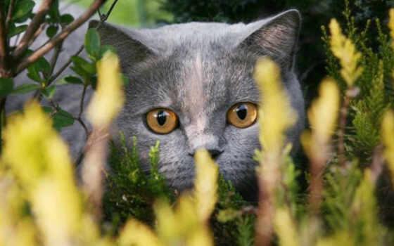 кошек, красивые, фотографий