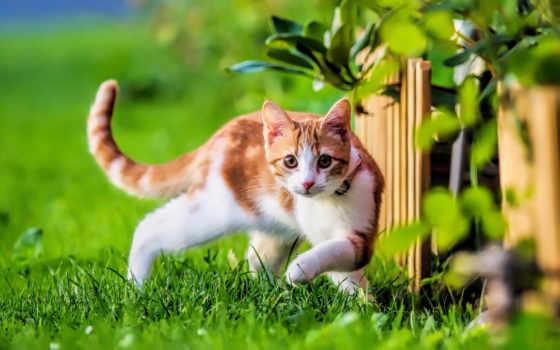 природа, summer, трава, невероятно, цветы, кот, red, картинка,