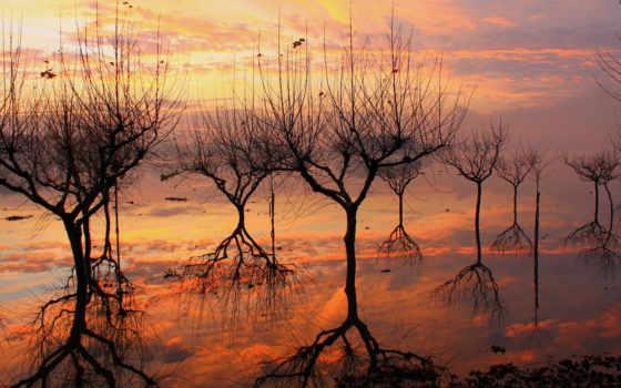 деревьев, отражение, воде, fone, голых, отражаются, силуэты, закате, заката, trees,