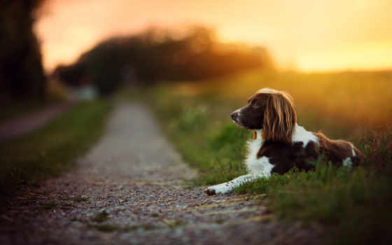 pack, fotografias, perros