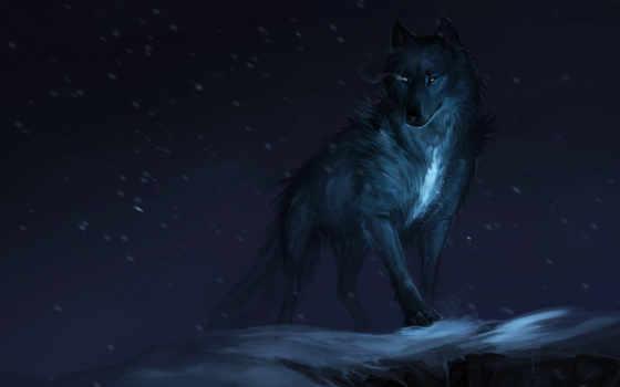 lobo, arte, fondos
