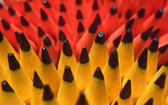 jewish, pencil, радио, jroot, растение,